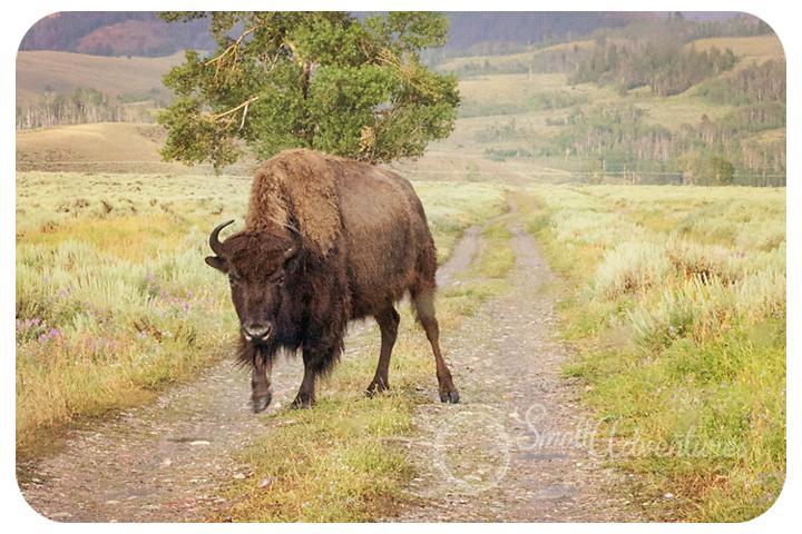 buffaloroadfb