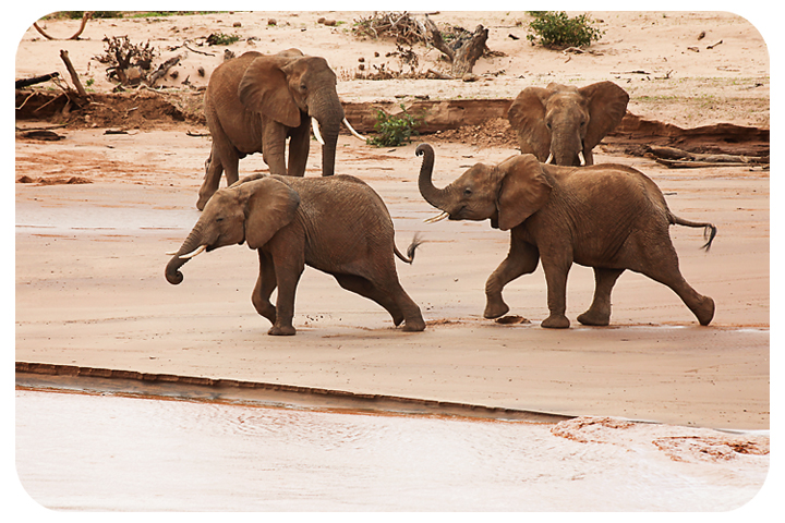 babyelephants2