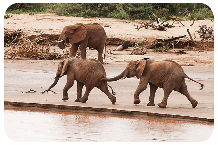 babyelephants3
