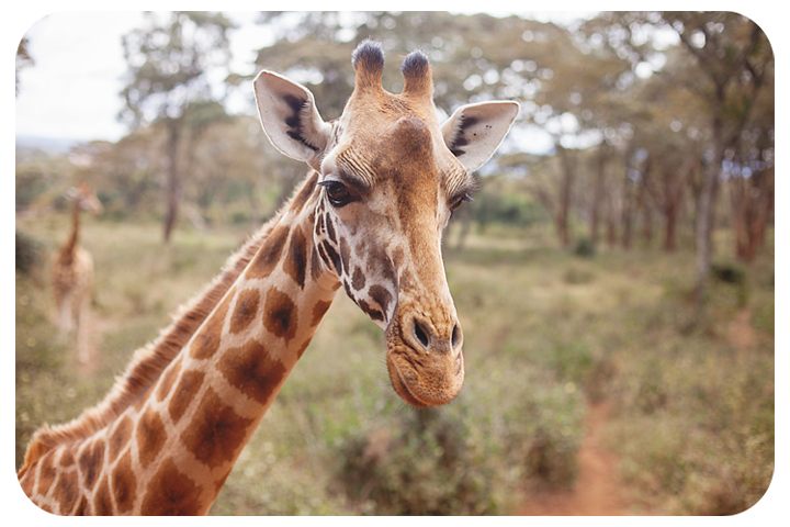 giraffeatreservefb
