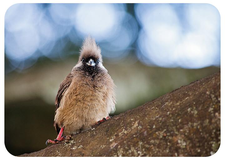 Thearkbabybirdtreefb