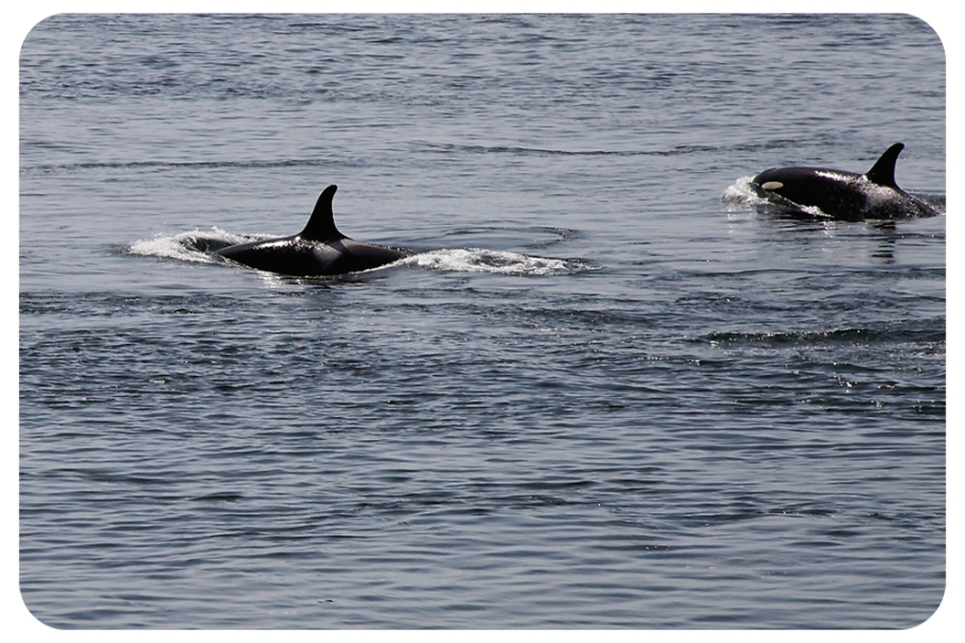 orca2fb