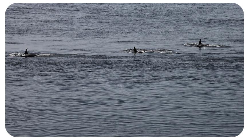 orca3fb
