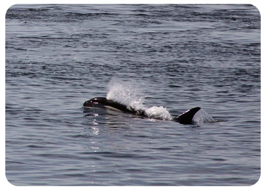 orcablowfb