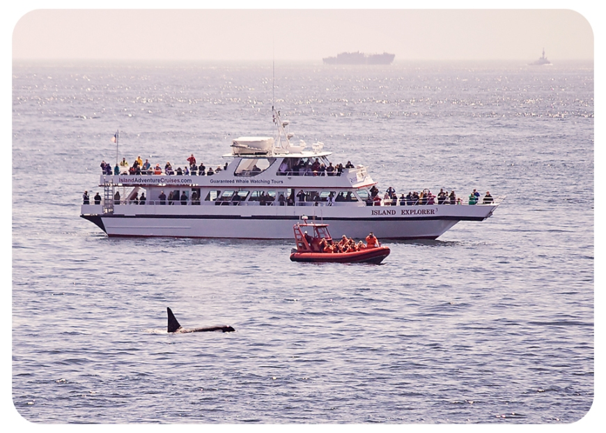 orcaboatsfb