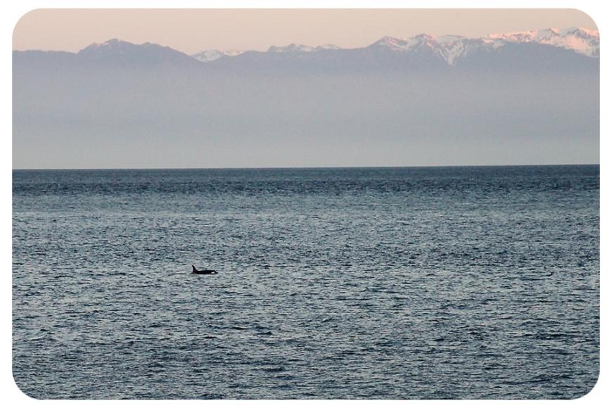 whalemountainsfb