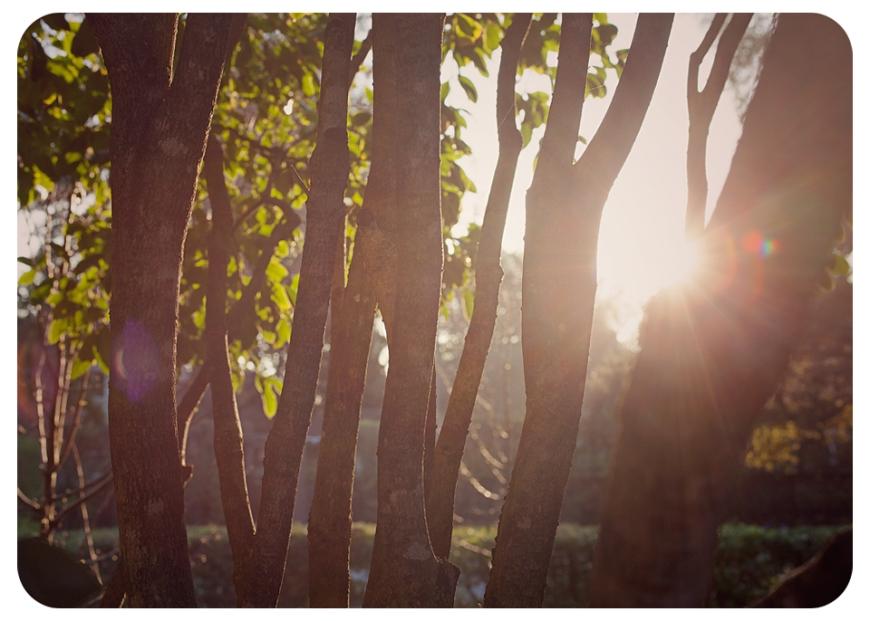 treessunFB